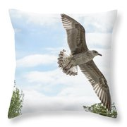 Juvenile Seagull In Flight Throw Pillow