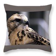 Juvenile Swainson's Hawk Throw Pillow