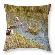 Juvenile White Ibis In The Everglades Throw Pillow