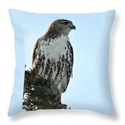 Juvi Red Tail Hawk Throw Pillow
