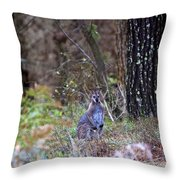 Kangaroo In The Forest Throw Pillow