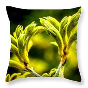 Kangaroo Paw 2 Throw Pillow