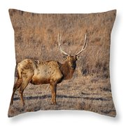 Kansas Elk Throw Pillow
