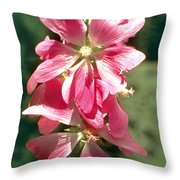 Kashmir Tree Mallow  Throw Pillow