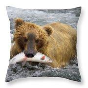 Katmai Grizzly Throw Pillow
