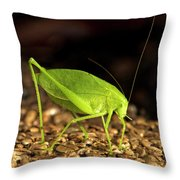 Katydid Close Up Bug Throw Pillow