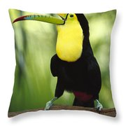 Keel Billed Toucan Calling Throw Pillow