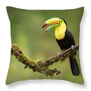 Keel Billed Toucan Perched On A Branch In The Rain Forest Throw Pillow