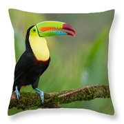 Keel Billed Toucan Perched On A Branch In The Rainforest Throw Pillow