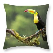 Keel-billed Toucan Perched Under The Rai Throw Pillow
