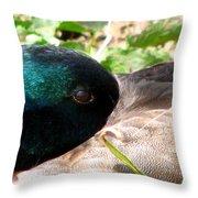 Keeping A Watchful Eye 2 Throw Pillow