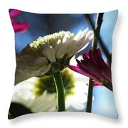 Keeping In The Sunlight... Throw Pillow