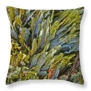 Kelp On A Rock Throw Pillow