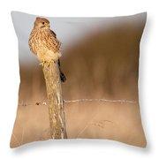 Kestrel In Evening Light Throw Pillow
