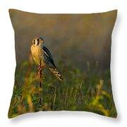 Kestrel In Meadow Throw Pillow