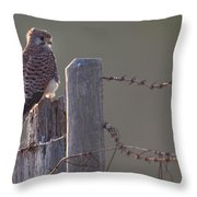 Kestrel On Rustic Fence Throw Pillow