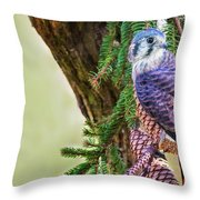 Kestrel On The Cones Throw Pillow