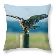Kestrel's Capture Throw Pillow