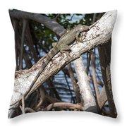 Key West Iguana In Mangrove 3 Throw Pillow