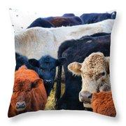 Kibler Valley Cows Throw Pillow