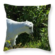 Kid Goat In Bushes Throw Pillow