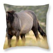 Kiger Stallion Throw Pillow