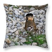 Kildeer And Eggs Throw Pillow by Douglas Barnett
