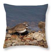 Kildeer On The Rocks Throw Pillow
