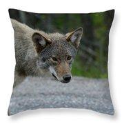 Killarney Coyote Throw Pillow
