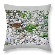 Killdeer 1 Throw Pillow by Douglas Barnett