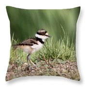 Killdeer - 24 Hours Old Throw Pillow