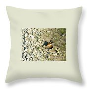 Killdeer Broken Wing Act Throw Pillow by Douglas Barnett