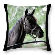 King Congie, Looking Ahead Throw Pillow