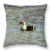King Eider Throw Pillow