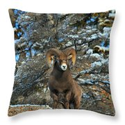 King Of The Canadian Rockies Throw Pillow