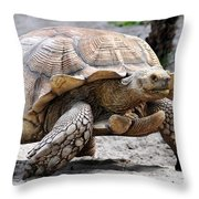 King Of The Galapagos Throw Pillow