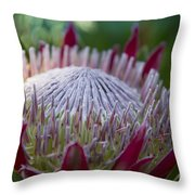 King Protea Island Flowers Jewel Of The Garden Throw Pillow