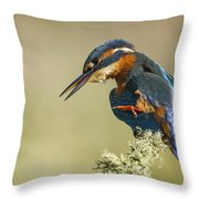 Kingfisher Itch Throw Pillow