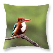 Kingfisher On A Limb Throw Pillow