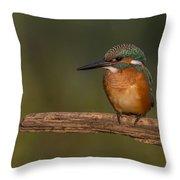 Kingfisher On Sunrise Throw Pillow