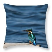 Kingfisher On The Dock Throw Pillow