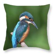 Kingfisher Watching Below Throw Pillow