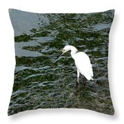 Kingston Jamaica Egret Throw Pillow