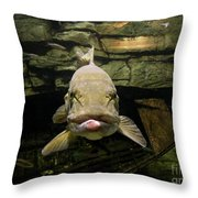 Kiss Me You Fool Throw Pillow