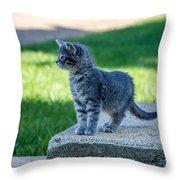 Kitten 1 Throw Pillow