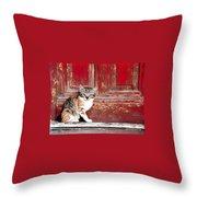 Kitten By Red Door Throw Pillow