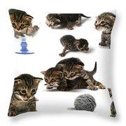 Kitten Collage Throw Pillow