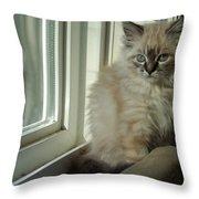 Kitten Daydreams Throw Pillow