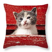 Kitten In Red Drawer Throw Pillow by Garry Gay