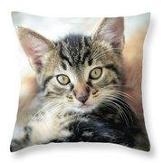 Kitten Looking Throw Pillow